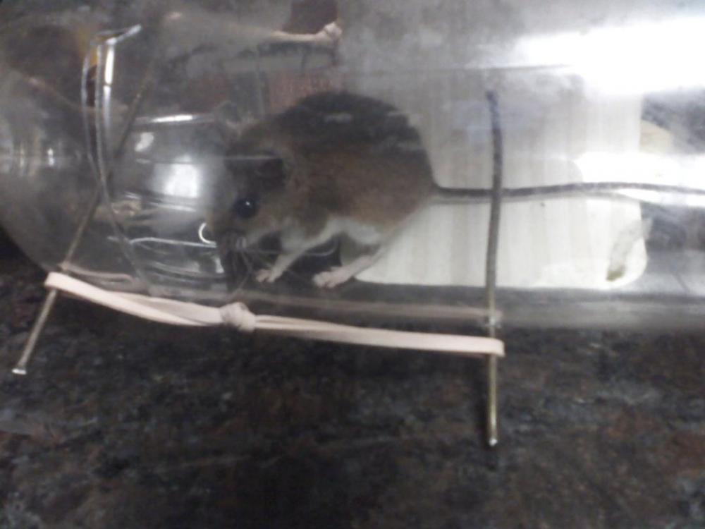 Mouse.thumb.jpg.3052c917bb76a854c27b8b3584d16a8d.jpg